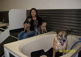 Muddy paws bath house self serve dog wash and grooming near denver literally thrown a life line when i created muddy paws bath house in 2006 i was diagnosed with breast cancer for the second time my oncologist told me solutioingenieria Gallery