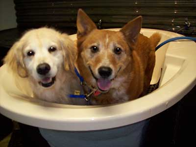 two pups in a tub